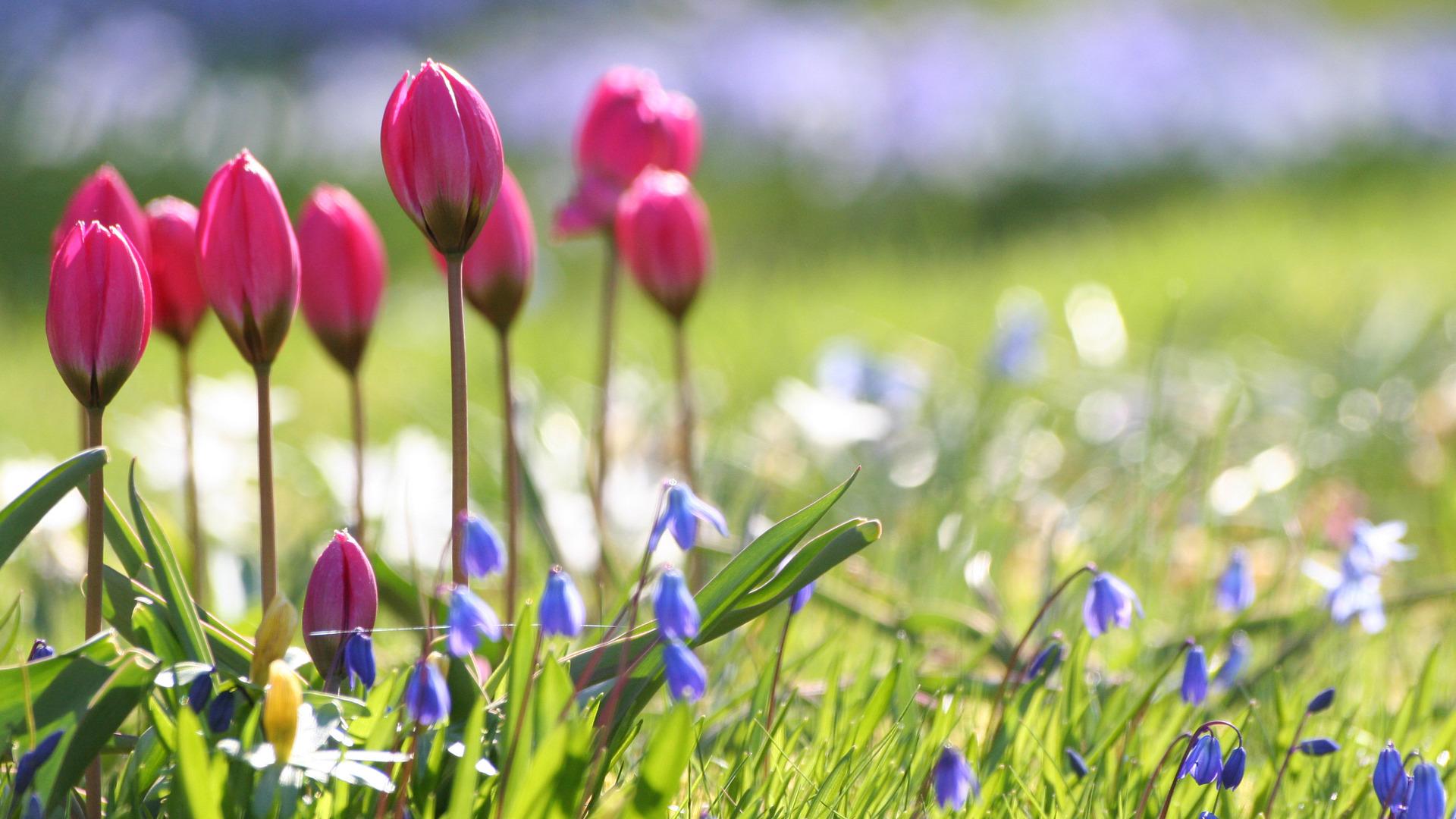 Поздравляем с праздником Весны и Труда!